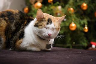 Sleeping Cat / mchaconcr