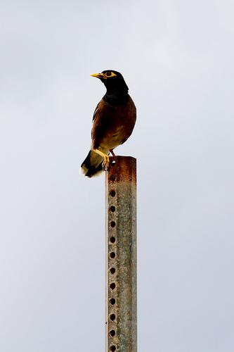 Kauai Bird / ssshupe