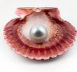 Pearl / mandolux